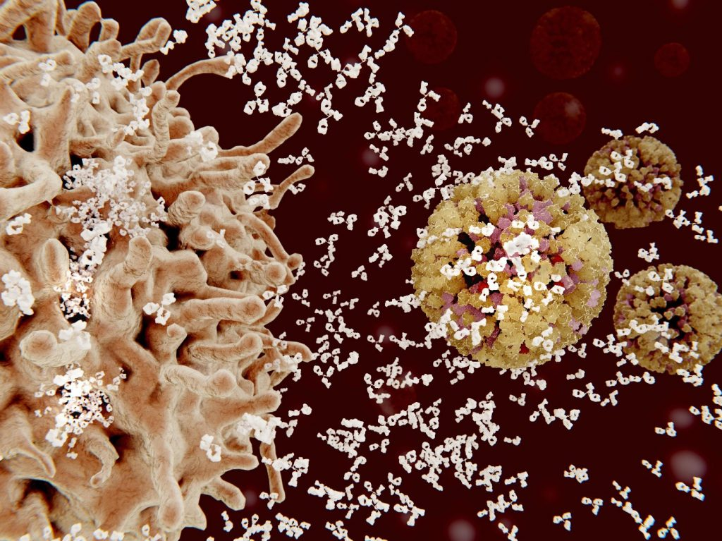 Immune cells fighting infection