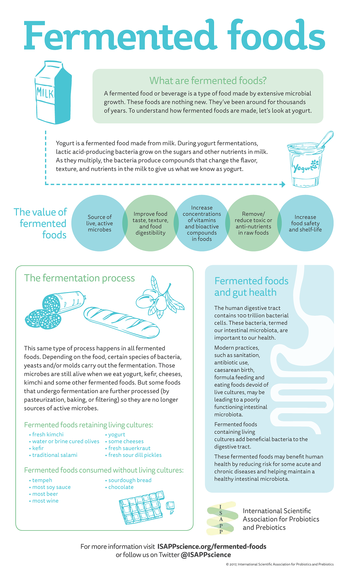 Infographic showing how fermented foods provide a health benefit, which ones have active cultures, etc