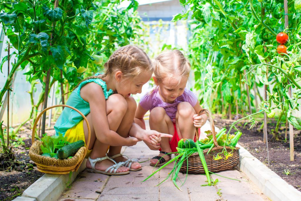 Young children picking vegetables in a garden