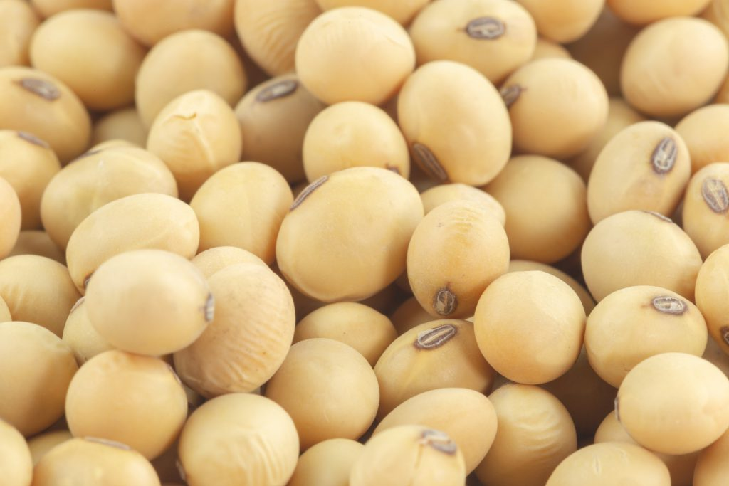 Close up image of soybeans