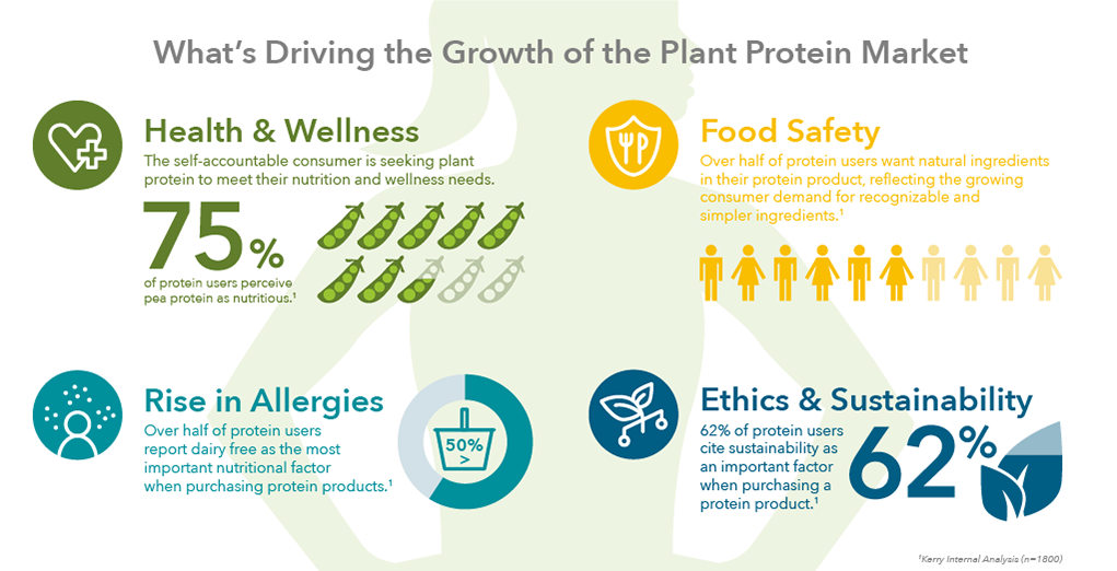 Health, allergen avoidance, food safety, ethics, and sustainability are all drivers of plant protein market growth
