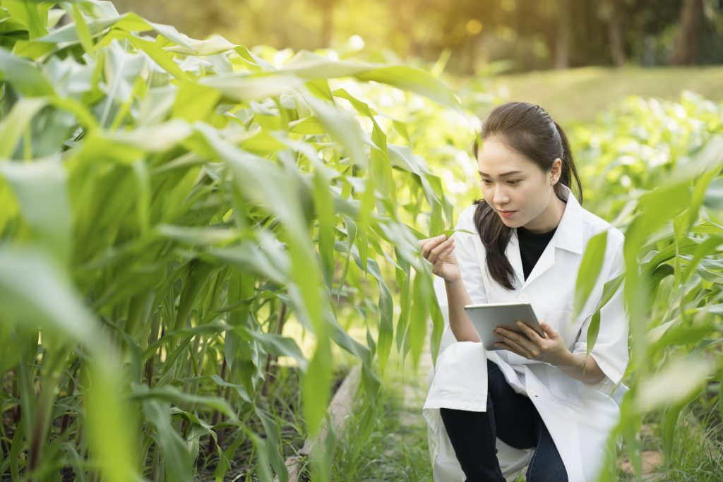 Woman examining plant
