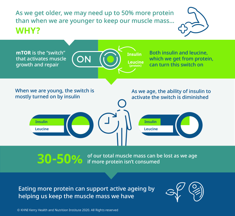 Infographic showing how muscle growth and repair is stimulated, and how this decreases during ageing